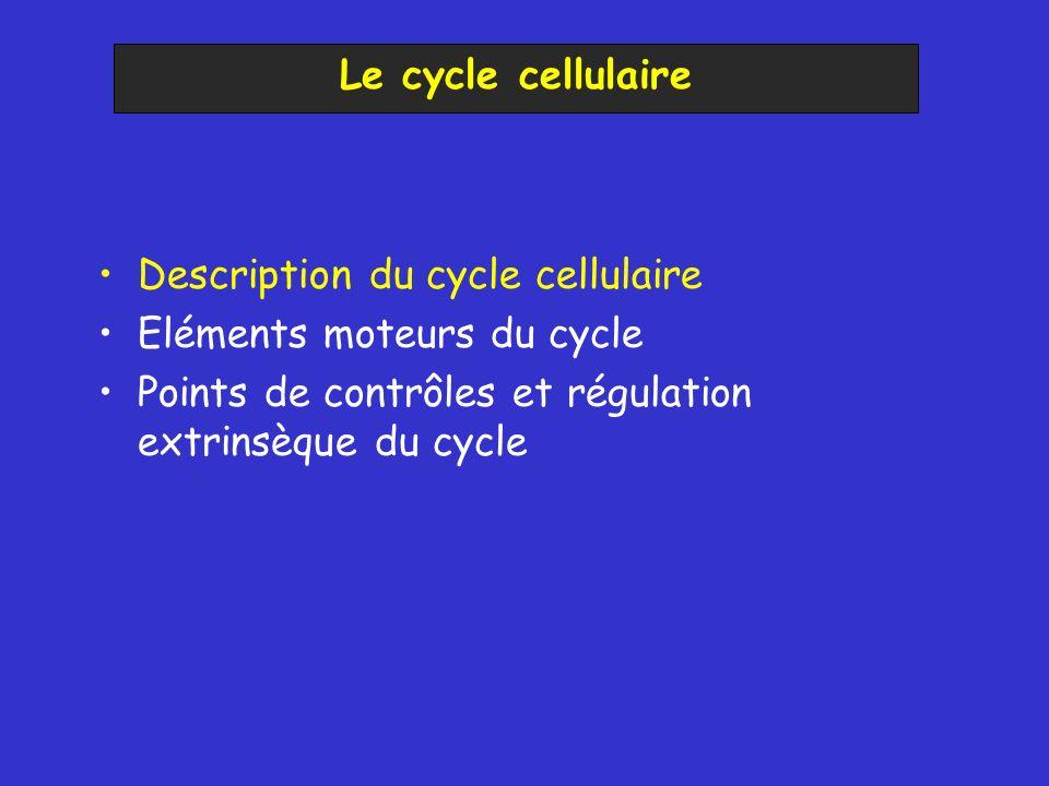 Description du cycle cellulaire Eléments moteurs du cycle Points de contrôles et régulation extrinsèque du cycle Points de contrôle internes Régulation extrinsèque –Nature des signaux –Voies de transduction Le cycle cellulaire