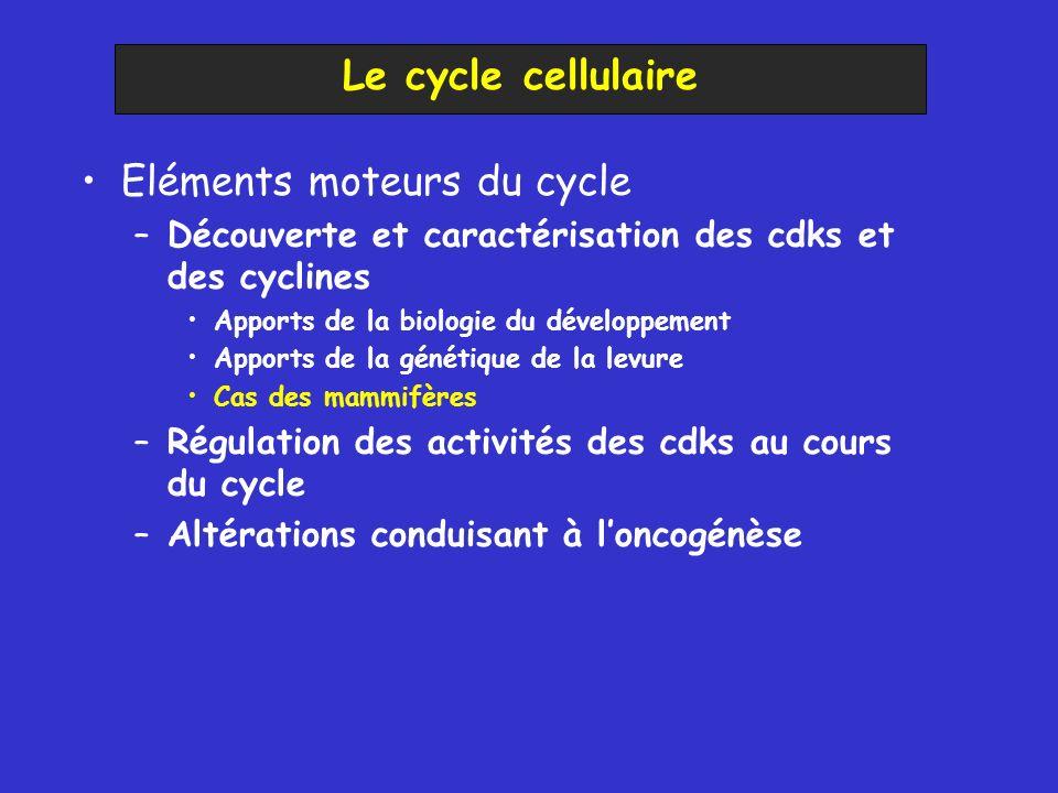 Eléments moteurs du cycle –Découverte et caractérisation des cdks et des cyclines Apports de la biologie du développement Apports de la génétique de la levure Cas des mammifères –Régulation des activités des cdks au cours du cycle –Altérations conduisant à loncogénèse Le cycle cellulaire
