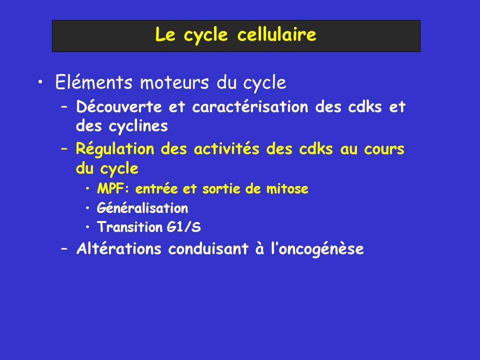 Eléments moteurs du cycle –Découverte et caractérisation des cdks et des cyclines –Régulation des activités des cdks au cours du cycle MPF: entrée et sortie de mitose Généralisation Transition G1/S –Altérations conduisant à loncogénèse Le cycle cellulaire