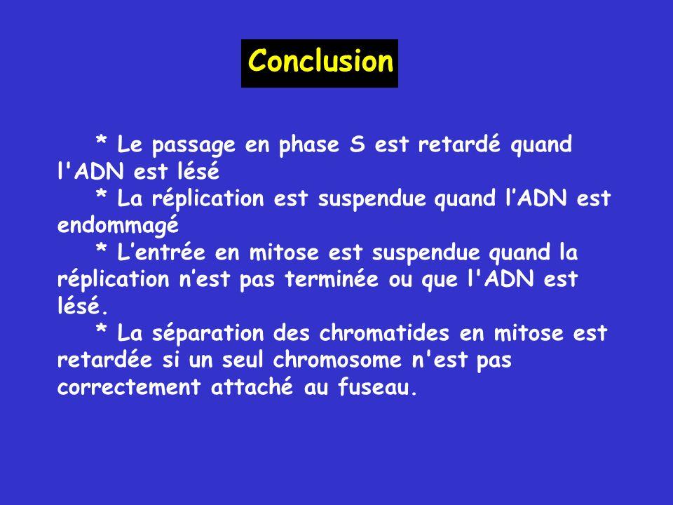 * Le passage en phase S est retardé quand l ADN est lésé * La réplication est suspendue quand lADN est endommagé * Lentrée en mitose est suspendue quand la réplication nest pas terminée ou que l ADN est lésé.