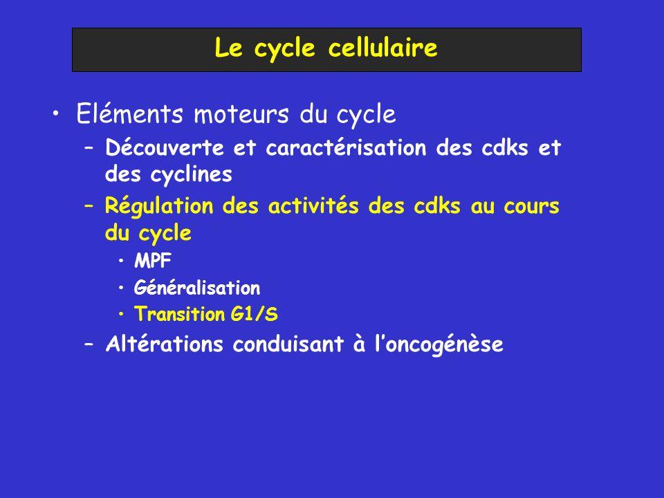 Eléments moteurs du cycle –Découverte et caractérisation des cdks et des cyclines –Régulation des activités des cdks au cours du cycle MPF Généralisation Transition G1/S –Altérations conduisant à loncogénèse Le cycle cellulaire