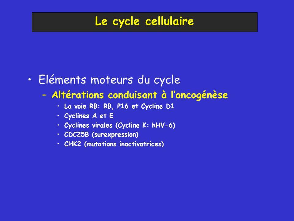 Eléments moteurs du cycle –Altérations conduisant à loncogénèse La voie RB: RB, P16 et Cycline D1 Cyclines A et E Cyclines virales (Cycline K: hHV-6)