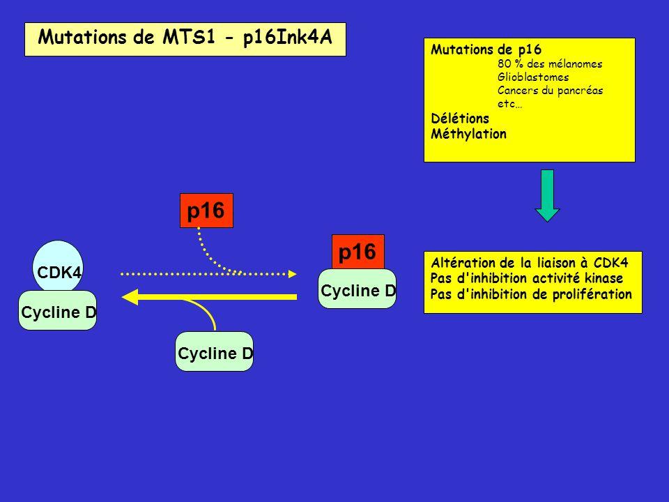 CDK4 Cycline D p16 Cycline D p16 Mutations de p16 80 % des mélanomes Glioblastomes Cancers du pancréas etc… Délétions Méthylation Altération de la lia