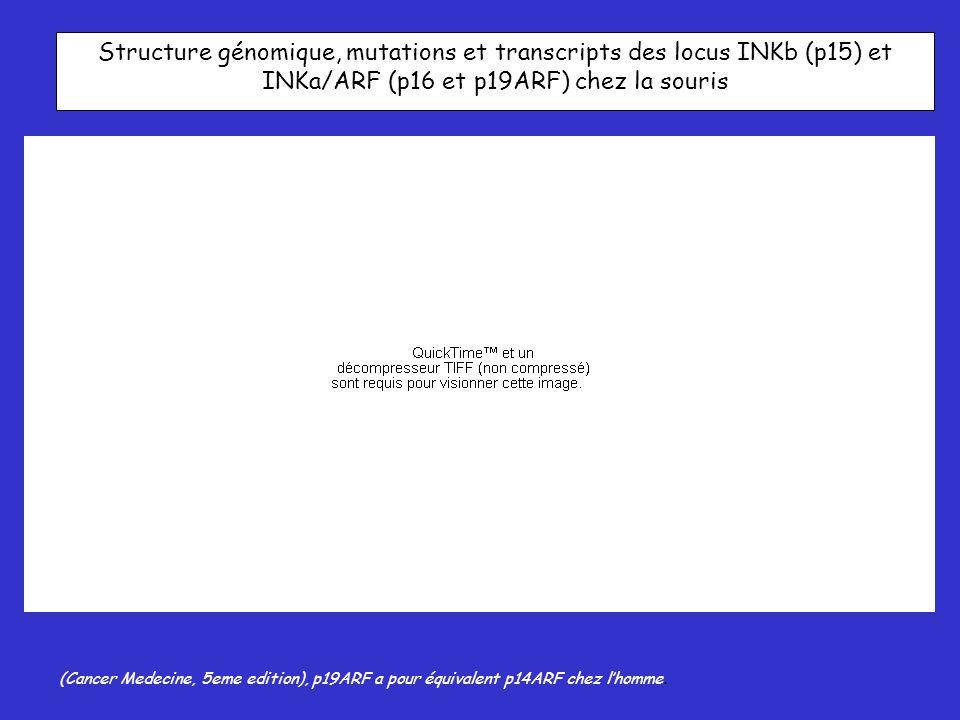 Structure génomique, mutations et transcripts des locus INKb (p15) et INKa/ARF (p16 et p19ARF) chez la souris (Cancer Medecine, 5eme edition), p19ARF a pour équivalent p14ARF chez lhomme.