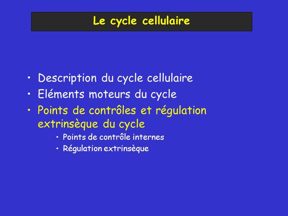 Description du cycle cellulaire Eléments moteurs du cycle Points de contrôles et régulation extrinsèque du cycle Points de contrôle internes Régulatio