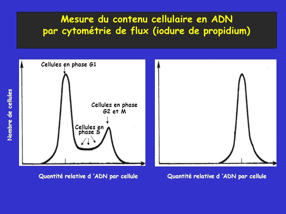 Mesure du contenu cellulaire en ADN par cytométrie de flux (iodure de propidium) Nombre de cellules Cellules en phase G1 Cellules en phase G2 et M Cel