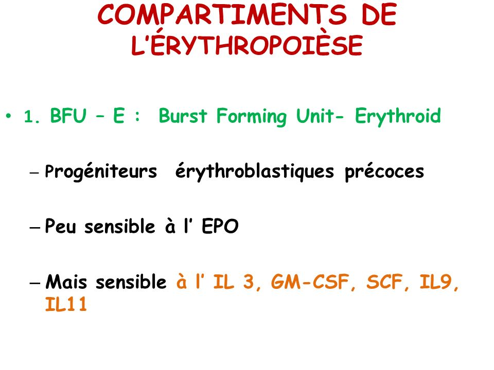 COMPARTIMENTS DE LÉRYTHROPOIÈSE 1.