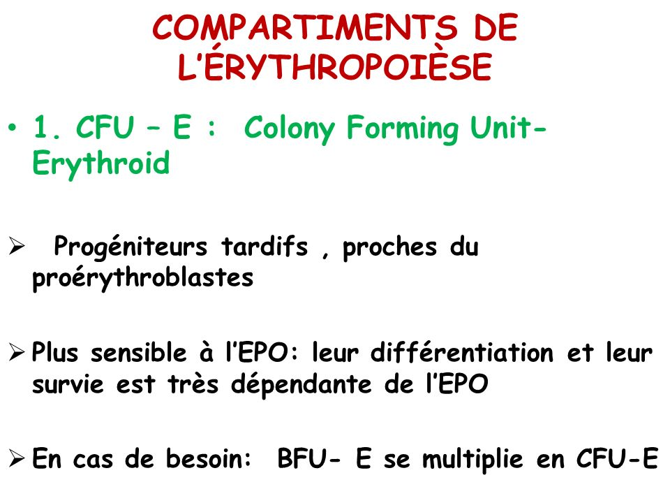 COMPARTIMENTS DE LÉRYTHROPOIÈSE 1. CFU – E : Colony Forming Unit- Erythroid Progéniteurs tardifs, proches du proérythroblastes Plus sensible à lEPO: l