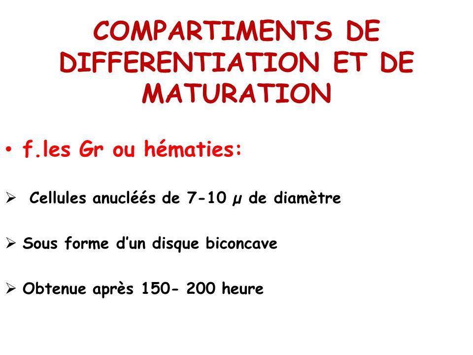COMPARTIMENTS DE DIFFERENTIATION ET DE MATURATION f.les Gr ou hématies: Cellules anucléés de 7-10 µ de diamètre Sous forme dun disque biconcave Obtenu