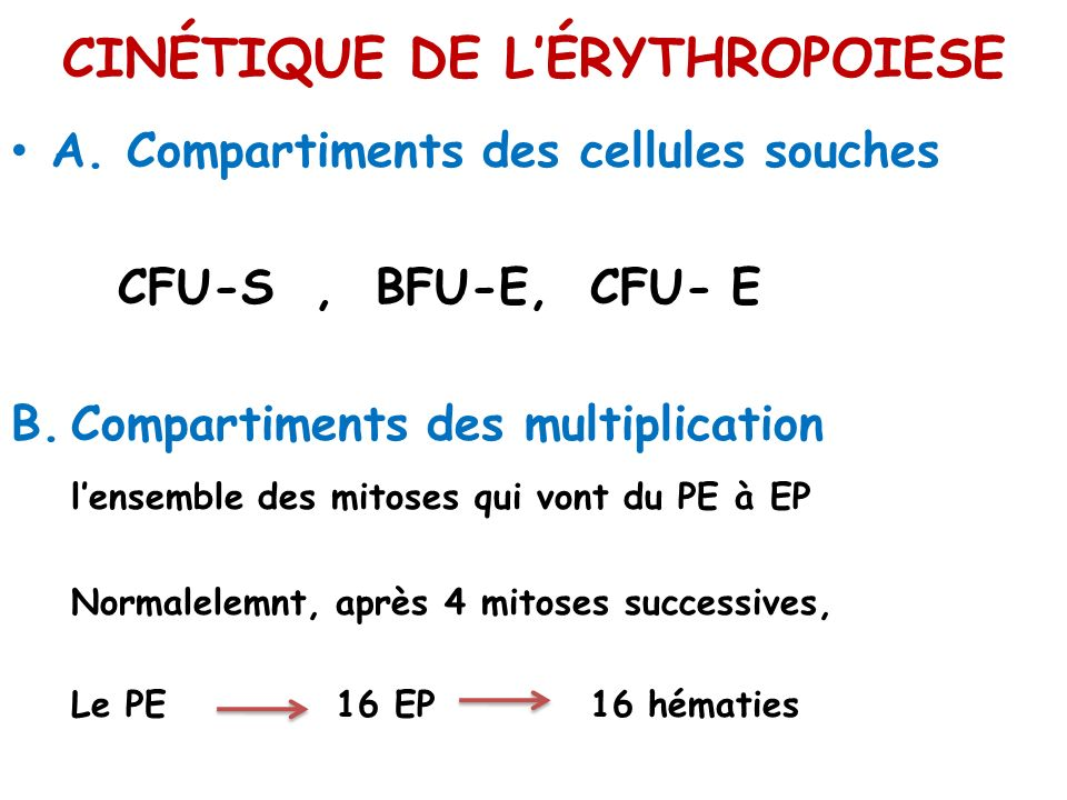CINÉTIQUE DE LÉRYTHROPOIESE A. Compartiments des cellules souches CFU-S, BFU-E, CFU- E B.Compartiments des multiplication lensemble des mitoses qui vo