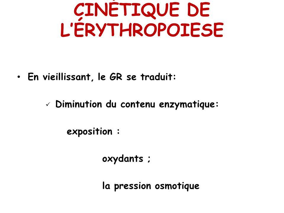 CINÉTIQUE DE LÉRYTHROPOIESE En vieillissant, le GR se traduit: Diminution du contenu enzymatique: exposition : oxydants ; la pression osmotique