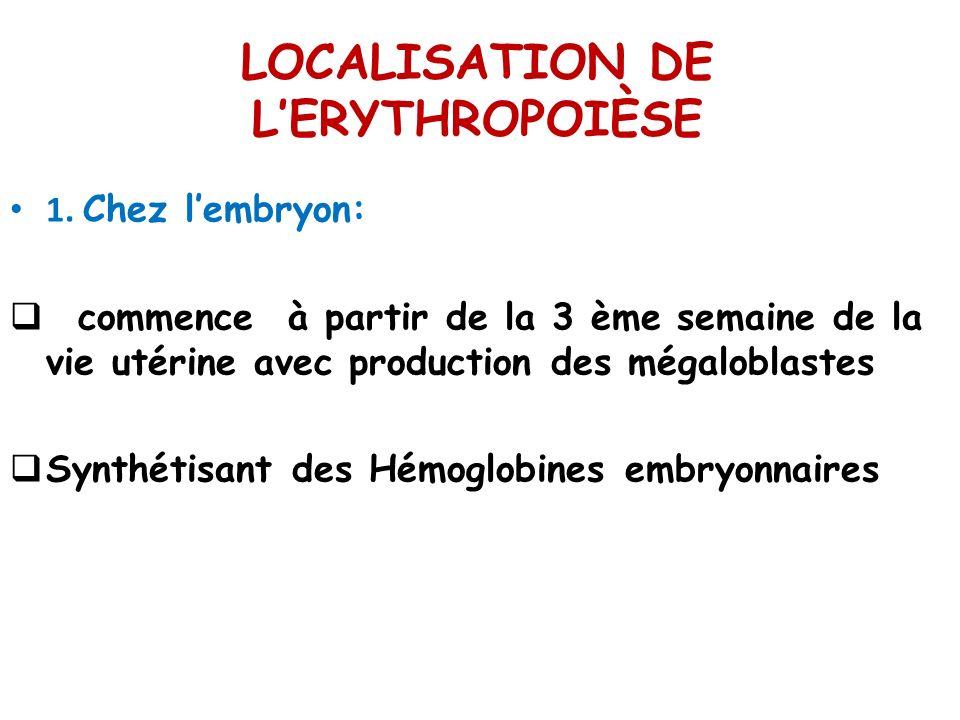 LOCALISATION DE LERYTHROPOIÈSE 1. Chez lembryon: commence à partir de la 3 ème semaine de la vie utérine avec production des mégaloblastes Synthétisan