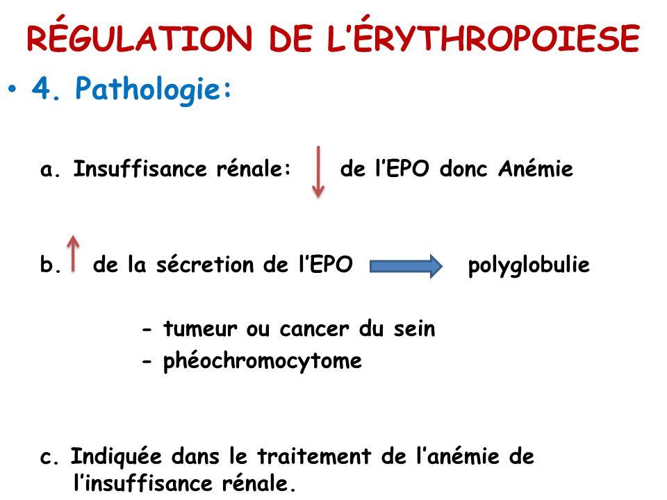 RÉGULATION DE LÉRYTHROPOIESE 4. Pathologie: a.Insuffisance rénale: de lEPO donc Anémie b. de la sécretion de lEPO polyglobulie - tumeur ou cancer du s