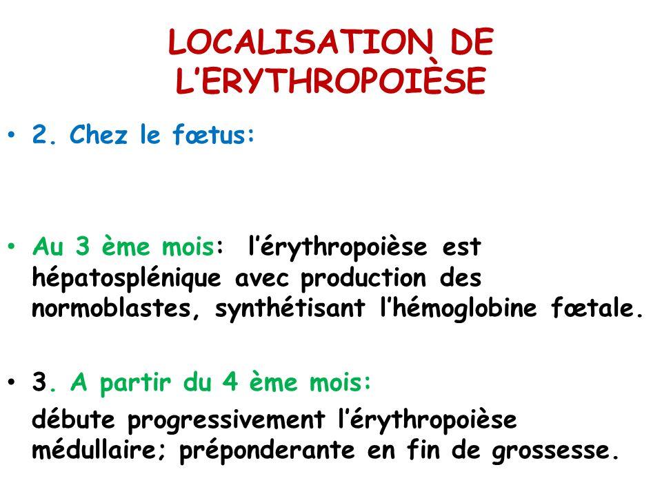 LOCALISATION DE LERYTHROPOIÈSE 2. Chez le fœtus: Au 3 ème mois: lérythropoièse est hépatosplénique avec production des normoblastes, synthétisant lhém