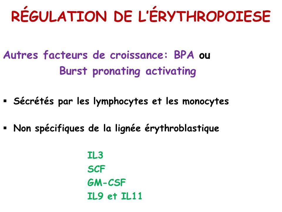 RÉGULATION DE LÉRYTHROPOIESE Autres facteurs de croissance: BPA ou Burst pronating activating Sécrétés par les lymphocytes et les monocytes Non spécif