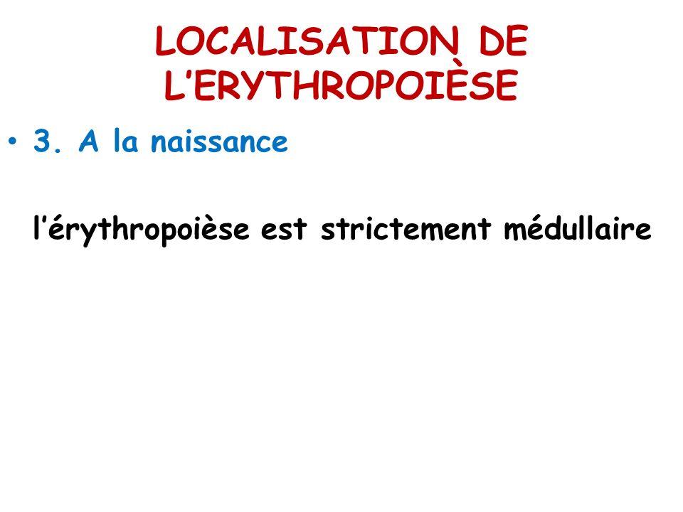 LOCALISATION DE LERYTHROPOIÈSE 3. A la naissance lérythropoièse est strictement médullaire