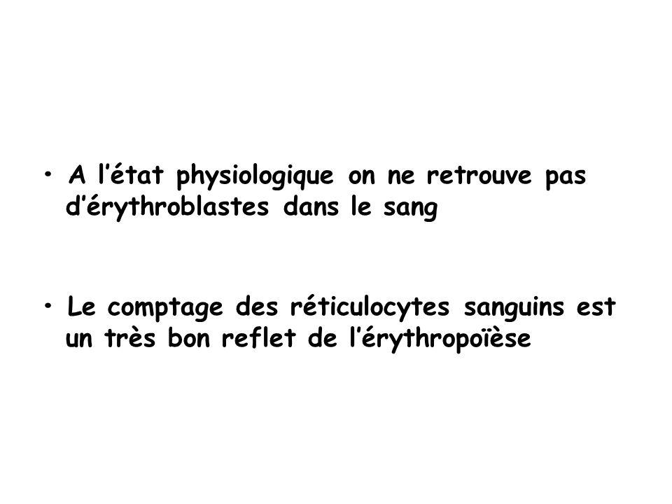 A létat physiologique on ne retrouve pas dérythroblastes dans le sang Le comptage des réticulocytes sanguins est un très bon reflet de lérythropoïèse