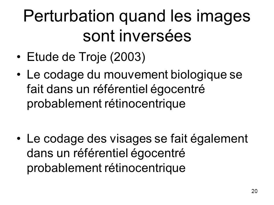 20 Perturbation quand les images sont inversées Etude de Troje (2003) Le codage du mouvement biologique se fait dans un référentiel égocentré probable