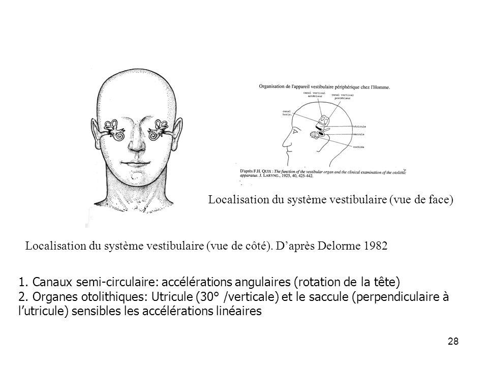 28 Localisation du système vestibulaire (vue de face) Localisation du système vestibulaire (vue de côté). Daprès Delorme 1982 1. Canaux semi-circulair