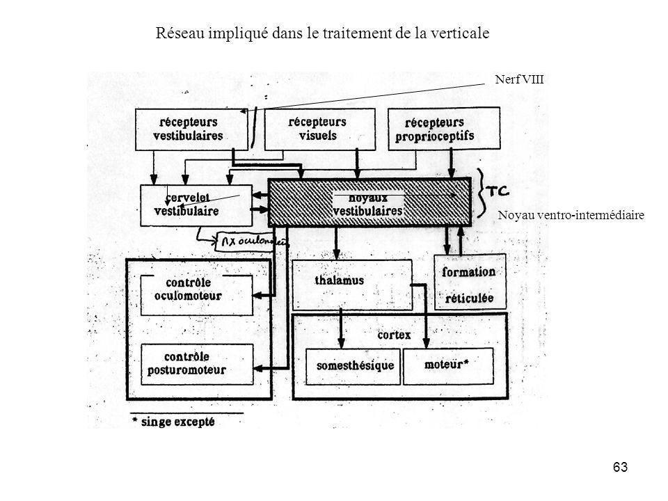 63 Nerf VIII Noyau ventro-intermédiaire Réseau impliqué dans le traitement de la verticale
