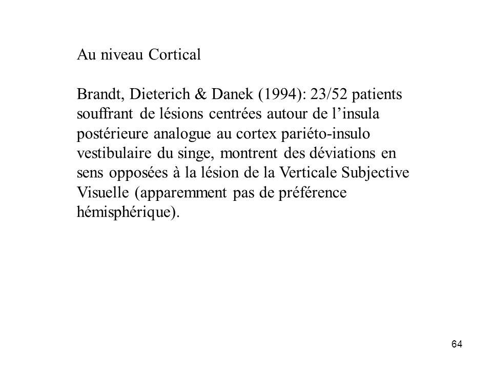 64 Au niveau Cortical Brandt, Dieterich & Danek (1994): 23/52 patients souffrant de lésions centrées autour de linsula postérieure analogue au cortex