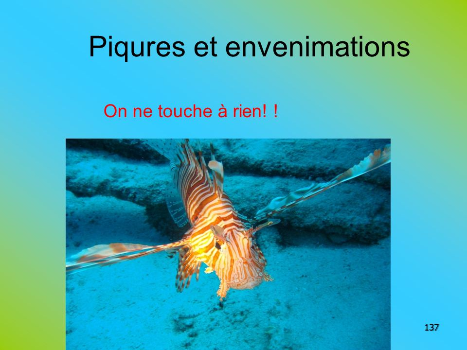 Piqures et envenimations On ne touche à rien! ! 137
