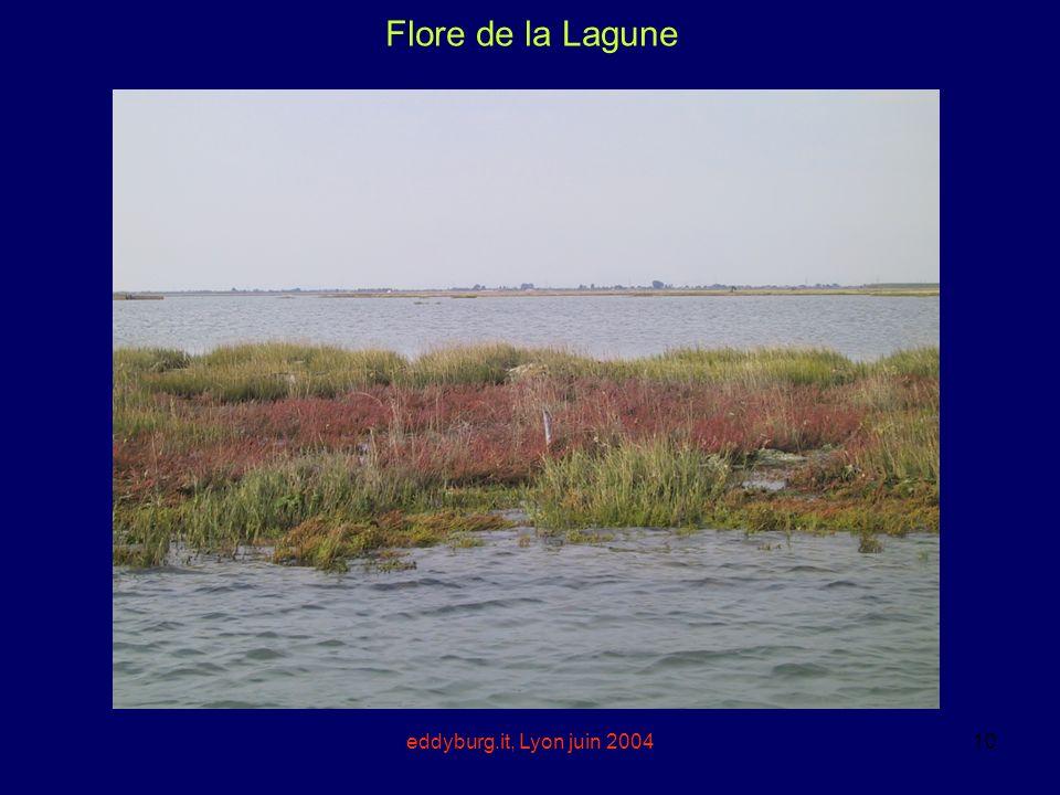 eddyburg.it, Lyon juin 200410 Flore de la Lagune