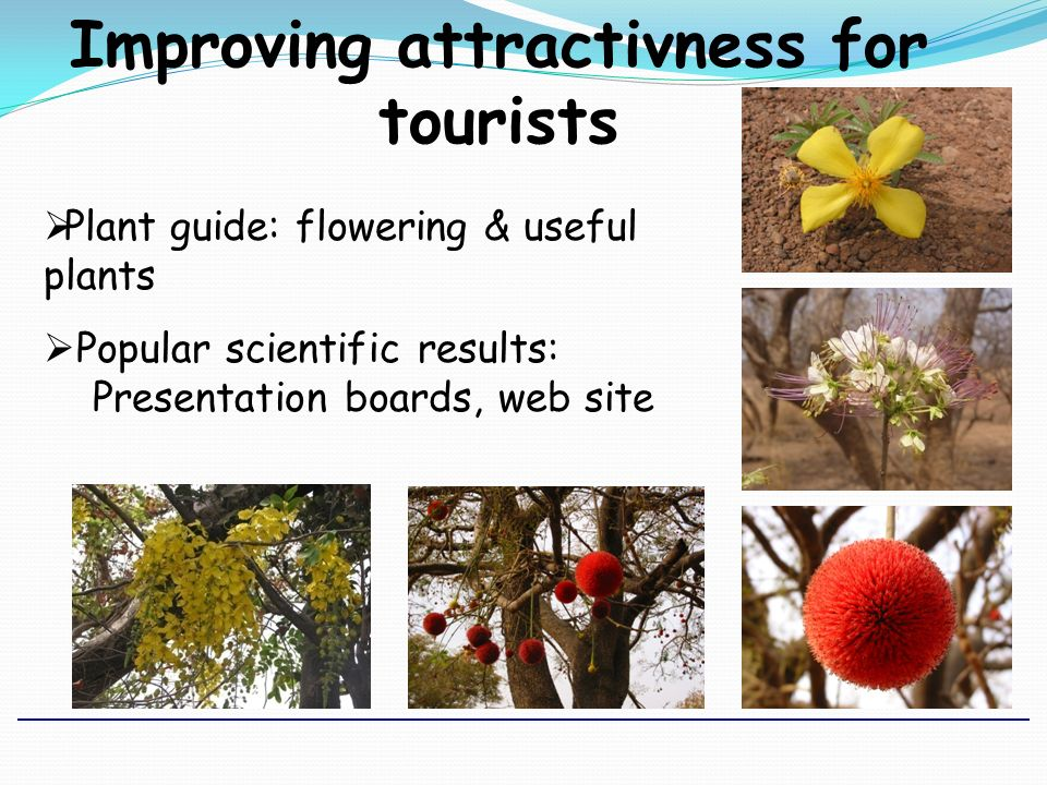 Improving attractivness for tourists Plant guide: flowering & useful plants Popular scientific results: Presentation boards, web site