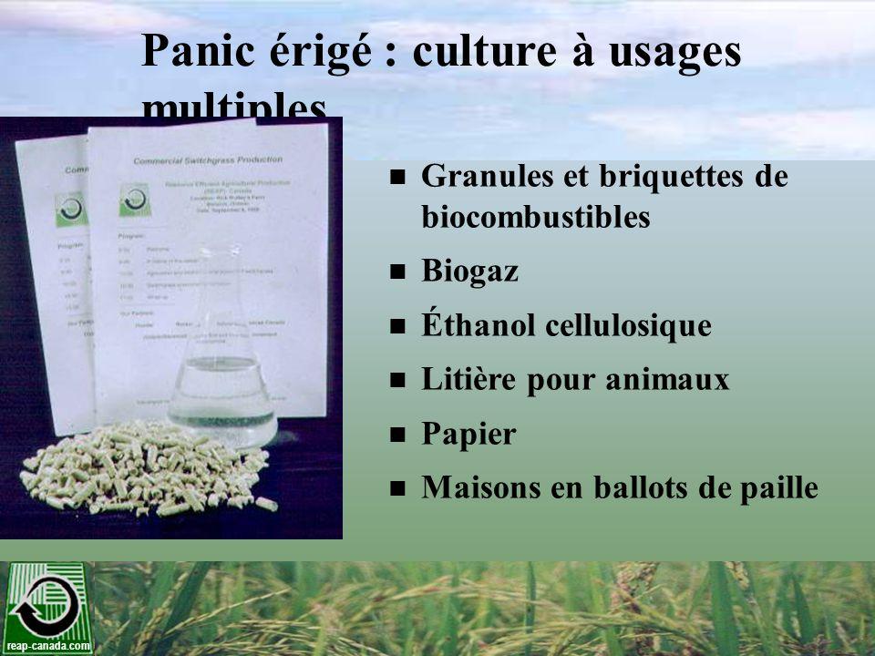reap-canada.com Panic érigé : culture à usages multiples Granules et briquettes de biocombustibles Biogaz Éthanol cellulosique Litière pour animaux Pa