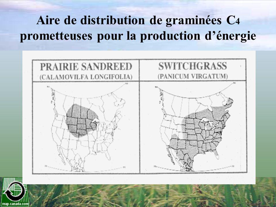 reap-canada.com Aire de distribution de graminées C 4 prometteuses pour la production dénergie