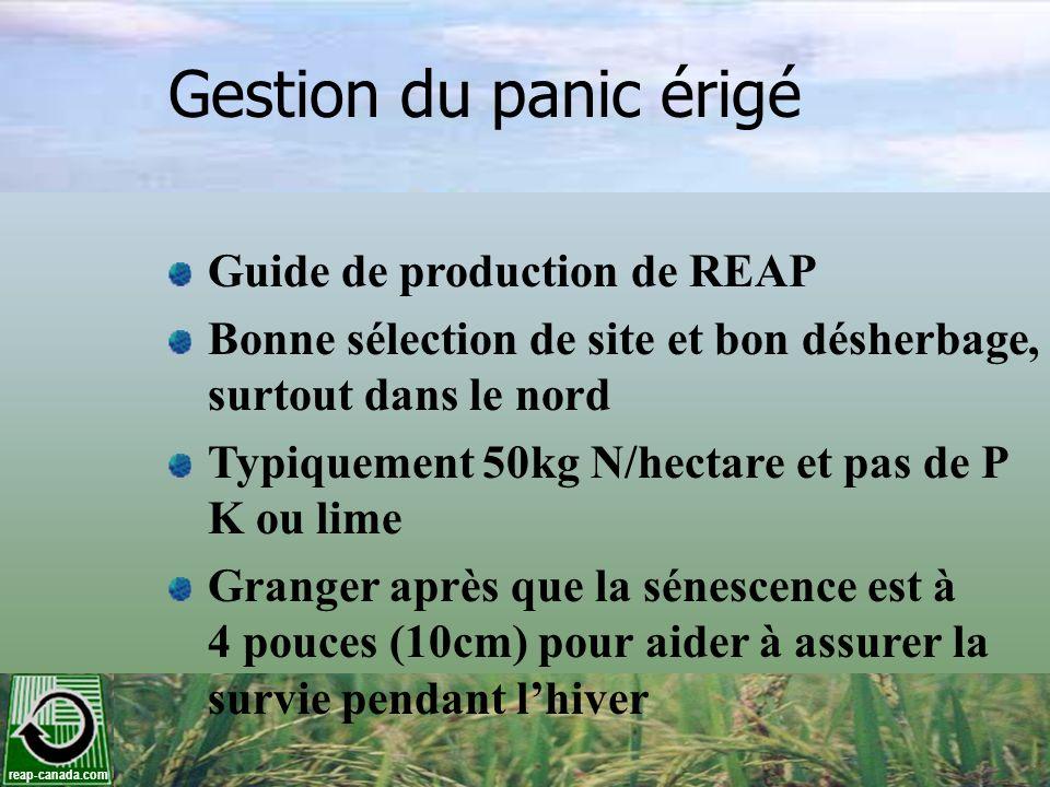 reap-canada.com Gestion du panic érigé Guide de production de REAP Bonne sélection de site et bon désherbage, surtout dans le nord Typiquement 50kg N/