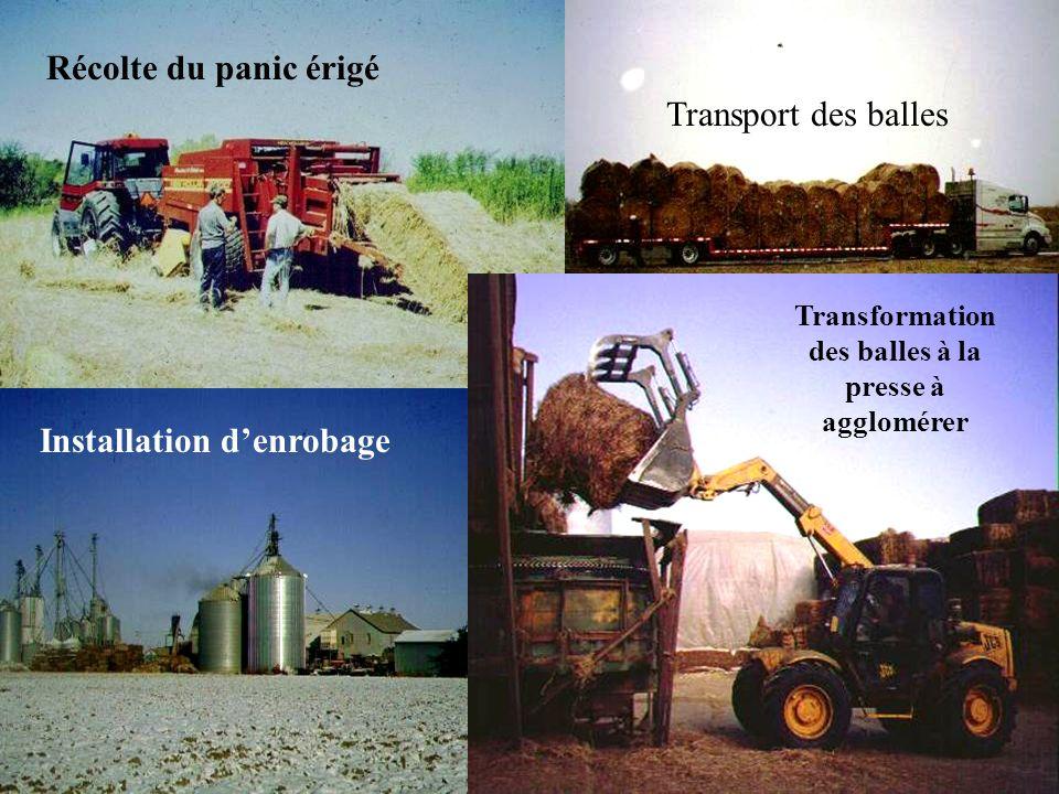 reap-canada.com Récolte du panic érigé Transformation des balles à la presse à agglomérer Transport des balles Installation denrobage