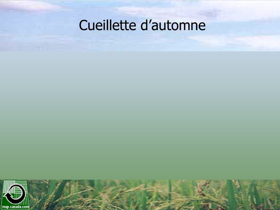 reap-canada.com Cueillette dautomne