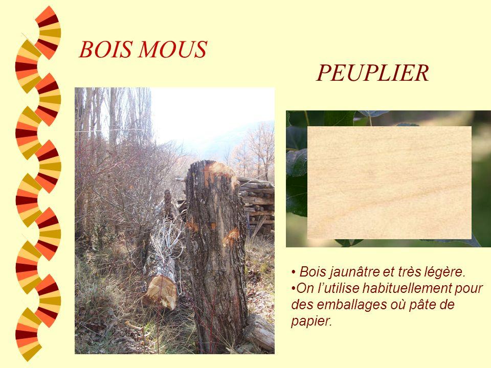 BOIS MOUS BALSA C'est un grand arbre, jusqu'à 30 m de haut, originaire des forêts équatoriales d'Amérique du Sud et d'Amérique centrale Bois de couleu