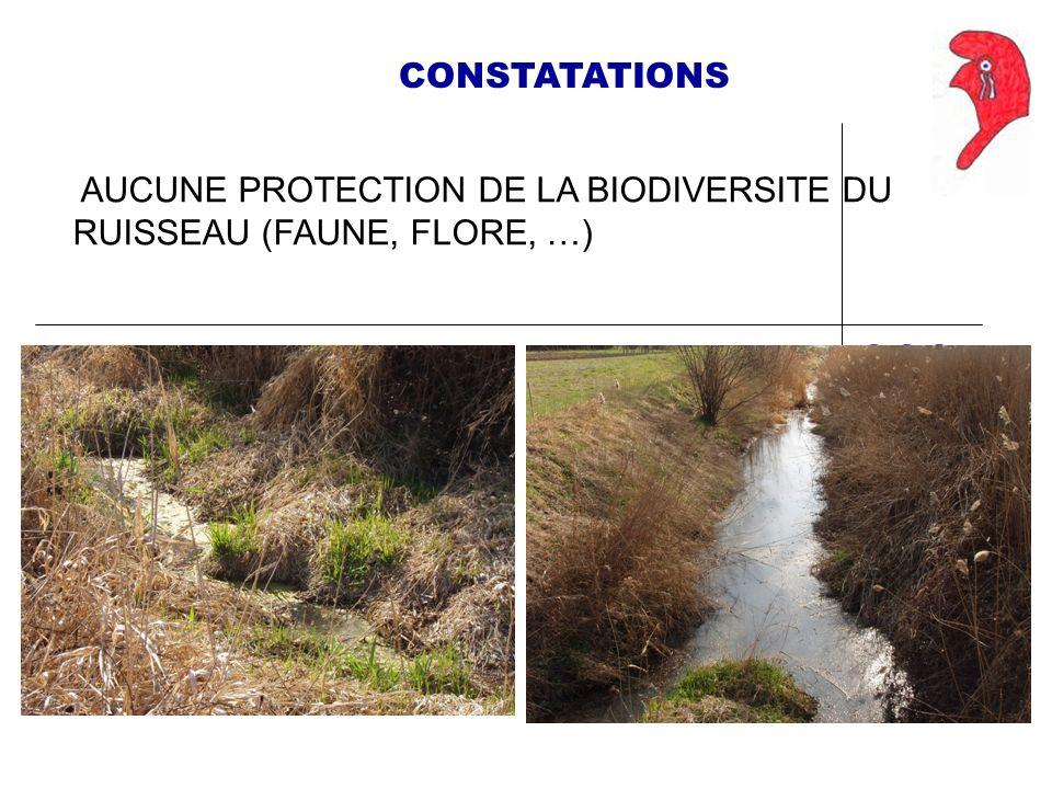 CONSTATATIONS AUCUNE PROTECTION DE LA BIODIVERSITE DU RUISSEAU (FAUNE, FLORE, …)
