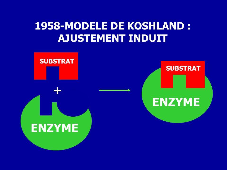 + 1958-MODELE DE KOSHLAND : AJUSTEMENT INDUIT ENZYME SUBSTRAT ENZYME SUBSTRAT