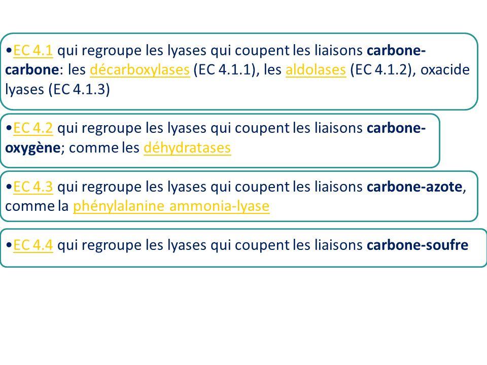 EC 4.1 qui regroupe les lyases qui coupent les liaisons carbone- carbone: les décarboxylases (EC 4.1.1), les aldolases (EC 4.1.2), oxacide lyases (EC