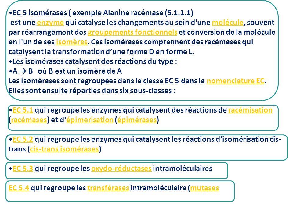 EC 5 isomérases ( exemple Alanine racémase (5.1.1.1) est une enzyme qui catalyse les changements au sein d'une molécule, souvent par réarrangement des