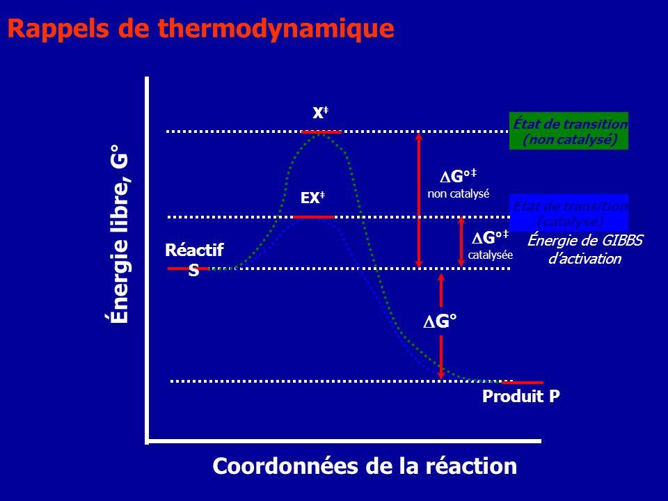 G° catalysée X État de transition (catalysé) EX État de transition (non catalysé) X Énergie de GIBBS dactivation Réactif S Produit P Coordonnées de la