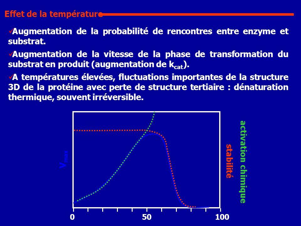 Augmentation de la probabilité de rencontres entre enzyme et substrat. Augmentation de la vitesse de la phase de transformation du substrat en produit