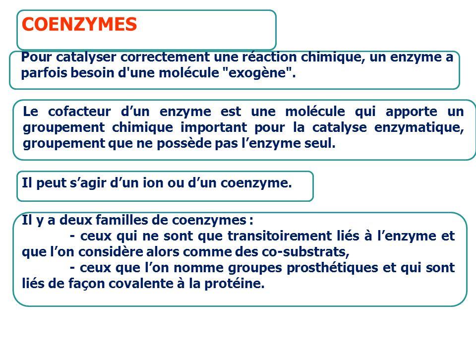 apoenzyme (inactif) +cofacteur holoenzyme (actif) COENZYMES