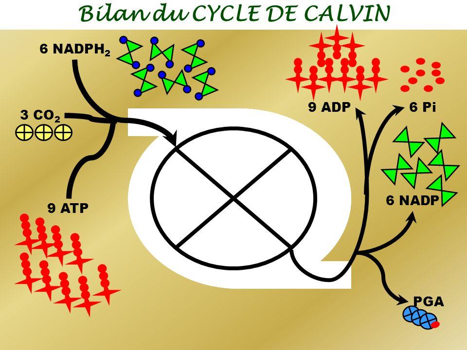 Bilan du CYCLE DE CALVIN 9 ADP 6 NADP 6 Pi PGA 3 CO 2 9 ATP 6 NADPH 2
