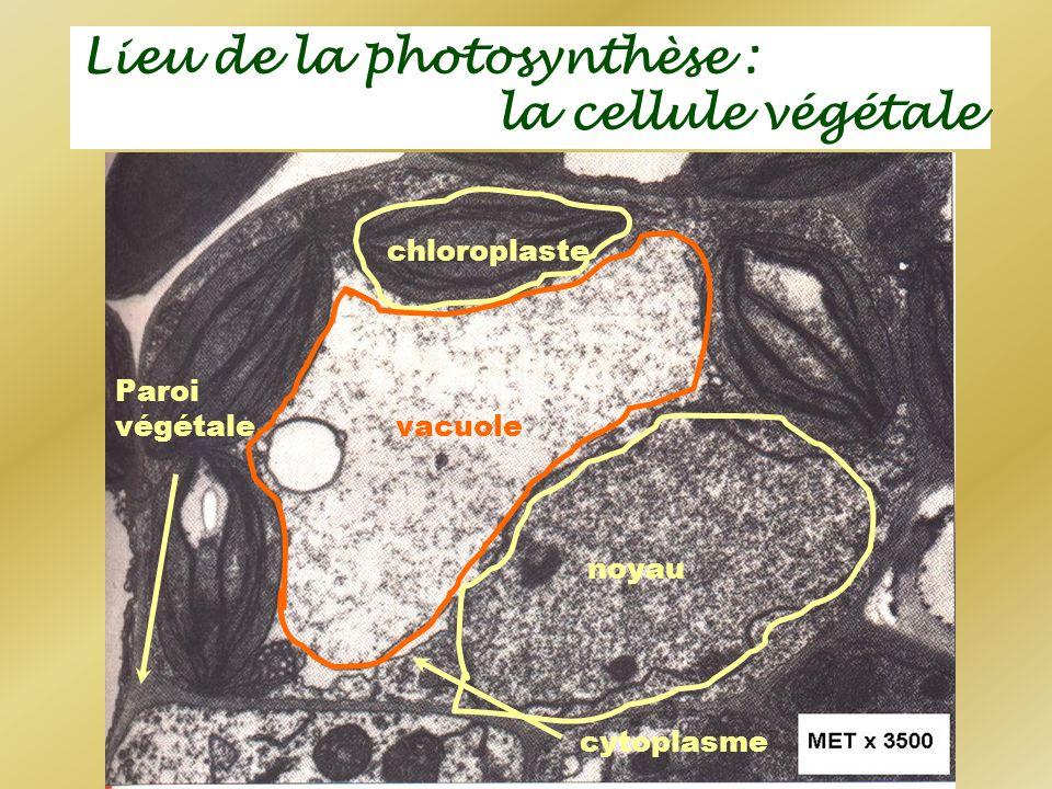 noyau chloroplaste vacuole Paroi végétale cytoplasme Lieu de la photosynthèse : la cellule végétale