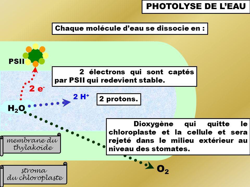 PSII stroma du chloroplaste membrane du thylakoïde H2OH2O 2 e - 2 électrons qui sont captés par PSII qui redevient stable. PHOTOLYSE DE LEAU O2O2 Diox