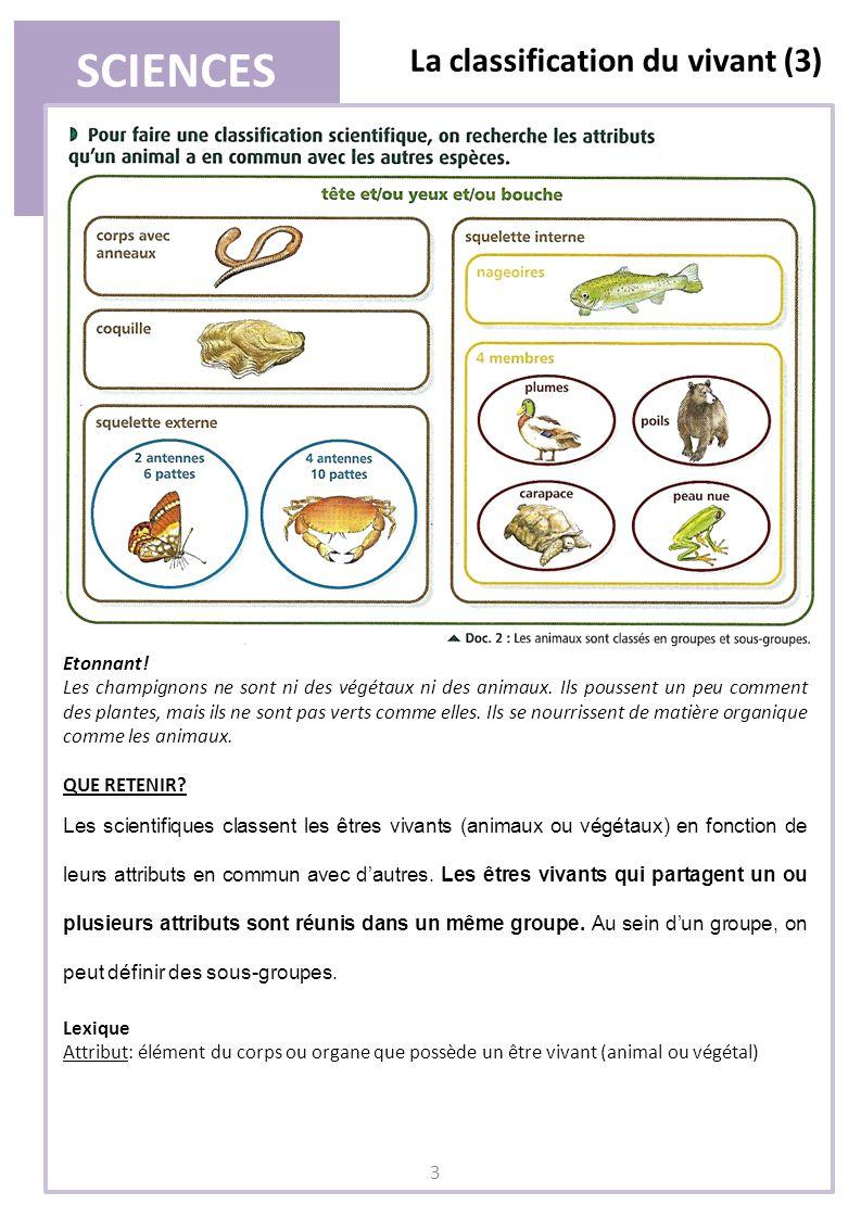 SCIENCES La classification du vivant (3) 3 Etonnant! Les champignons ne sont ni des végétaux ni des animaux. Ils poussent un peu comment des plantes,
