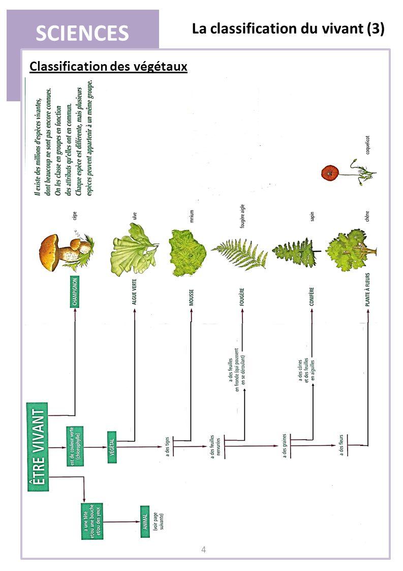 SCIENCES La classification du vivant (3) 5 Classification des animaux