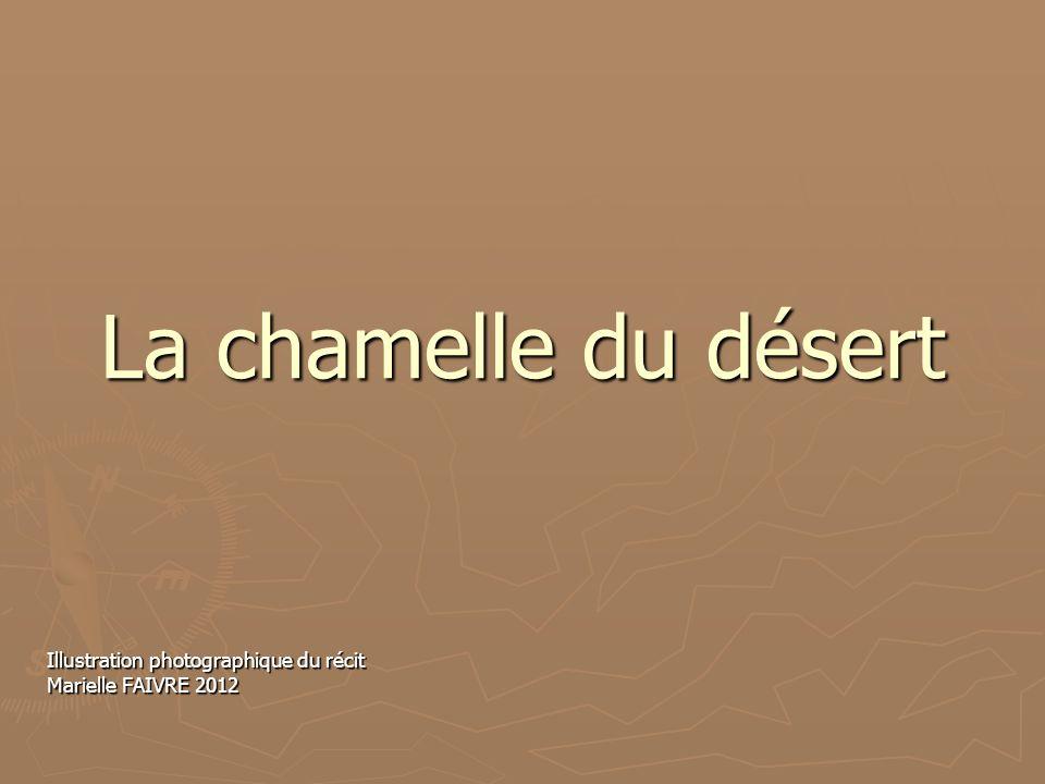 La chamelle du désert Illustration photographique du récit Marielle FAIVRE 2012