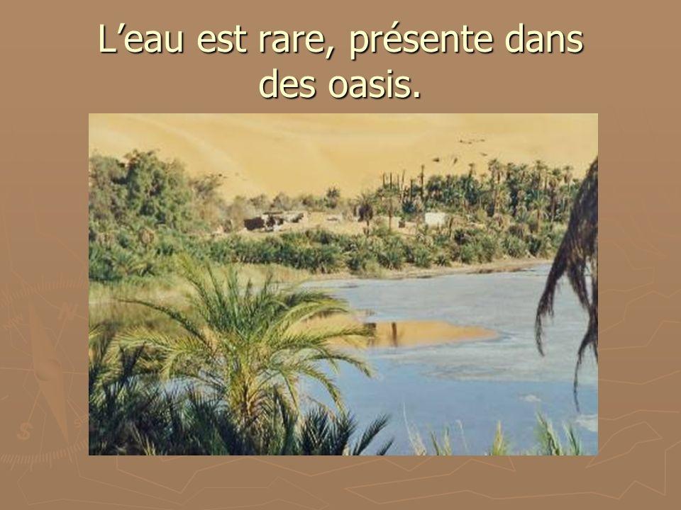 Leau est rare, présente dans des oasis.