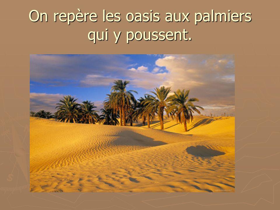 On repère les oasis aux palmiers qui y poussent.