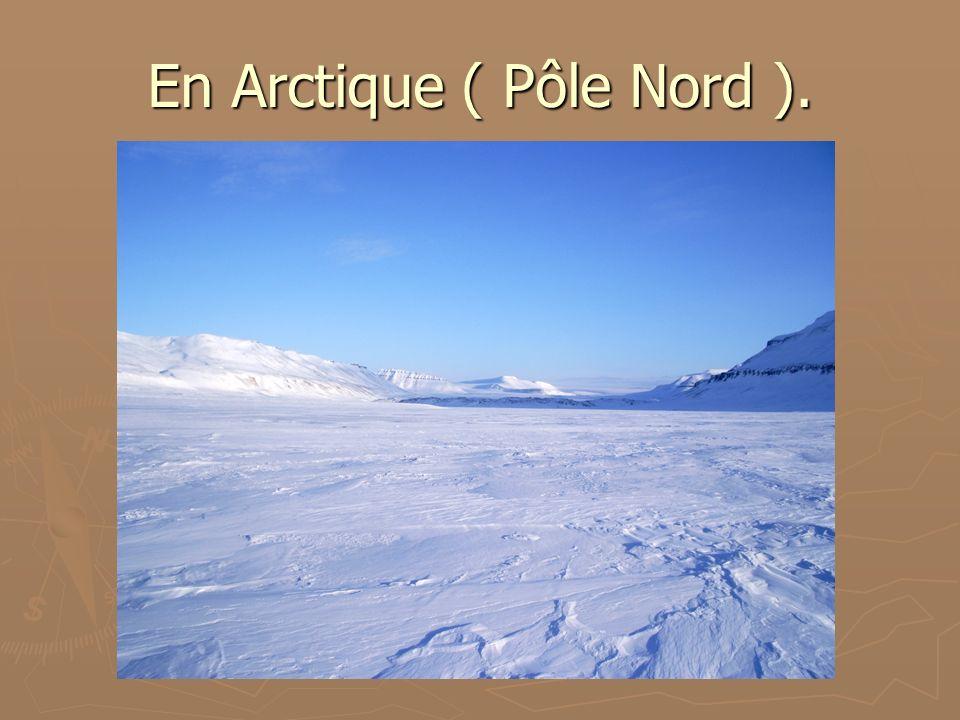 En Arctique ( Pôle Nord ).